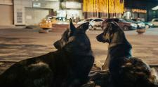 Space Dogs - recensione film kremser e peter